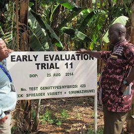 BPAT assesses IITA and NARO Banana breeding programs in Africa