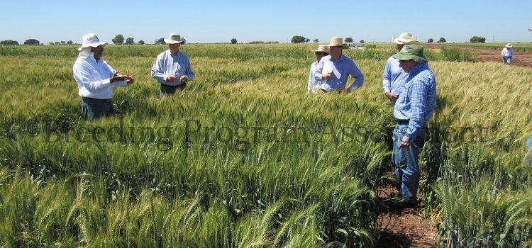 BPAT assessment of CIMMYT breeding programs