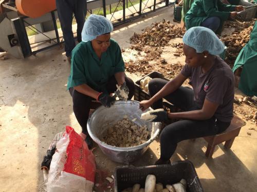 Cassava Preparation
