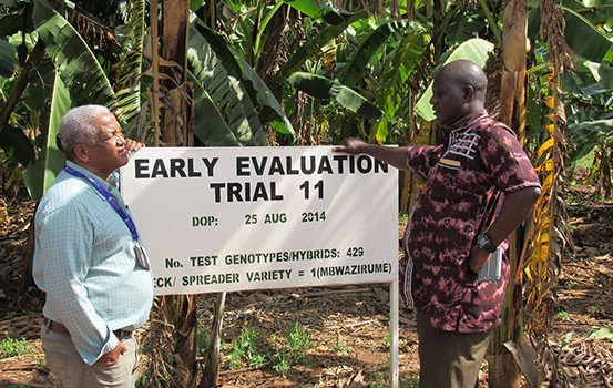 BPAT assesses IITA and NARO Banana breeding programs in Africa
