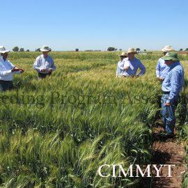 BPAT assessment of CIMMYT breeding programs